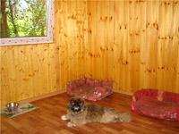 """Гостиница для собак """"Питер Догс Отель"""" пекинес"""